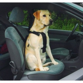 Beeztees cintura di sicurezza automobile per cane